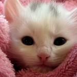 Destruktivno ponašanje mačaka