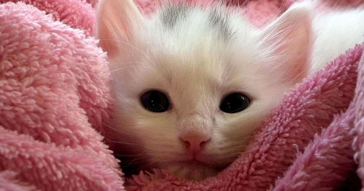 Cat-Corner-Tip1