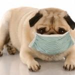 Alergije na hranu