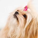 Najopasnija oboljenja pasa