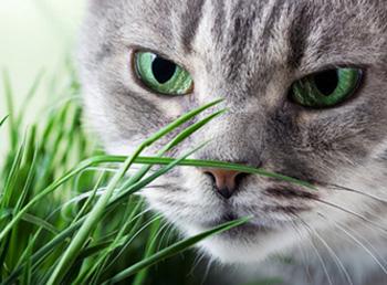 Najopasnija oboljenja maca