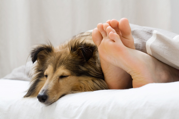Da li vaš pas spava u vašem krevetu?