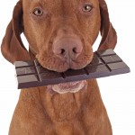 Da li je čokolada dobra za psa?
