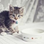 Da li mačke smiju piti mlijeko?