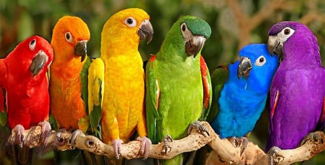 Psitakoza, ornitoza ili papagajska bolest